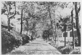 安静的乡间小路