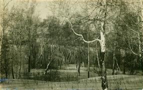 冬季的哈尔滨一林场