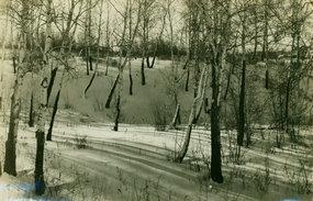 哈尔滨冬日里的林场