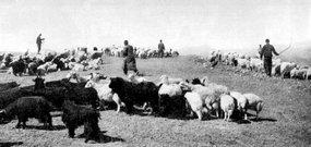 边区人民发展牧业生产支援前线