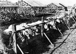 东北农场支援解放军的战马