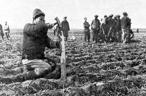 东北解放区的农民在自己分得的土地上插标牌