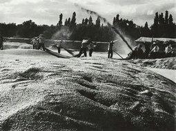 1950年扬场
