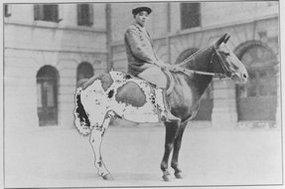 An Pau和猎纸赛马会服务人员的领导