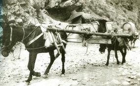 北方农村用牲畜运棺的场景
