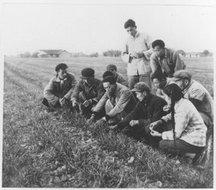 联勤生产队干部和小队长在检查小麦出苗情况